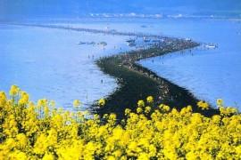 Jindo Sea parting Festival (진도 신비의 바닷길축제)
